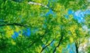 梅山保税港区三维数字地图建设项目